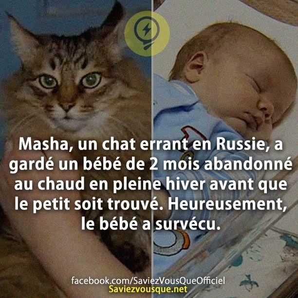 Masha, un chat errant en Russie, a gardé un bébé de 2 mois abandonné au chaud en pleine hiver avant que le petit soit trouvé. Heureusement, le bébé a survécu. | Saviez Vous Que?