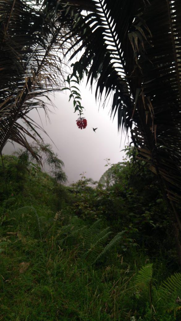Parque Natural Chicaque