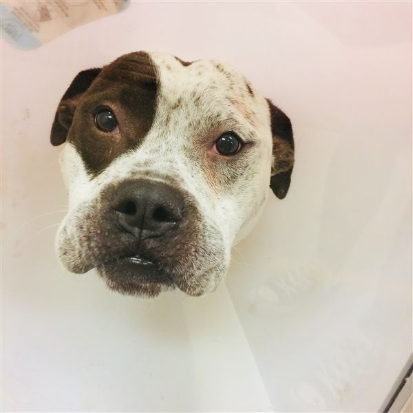 Bo Spca Of Texas Dallas 160537 With Images Spca Pets Animals