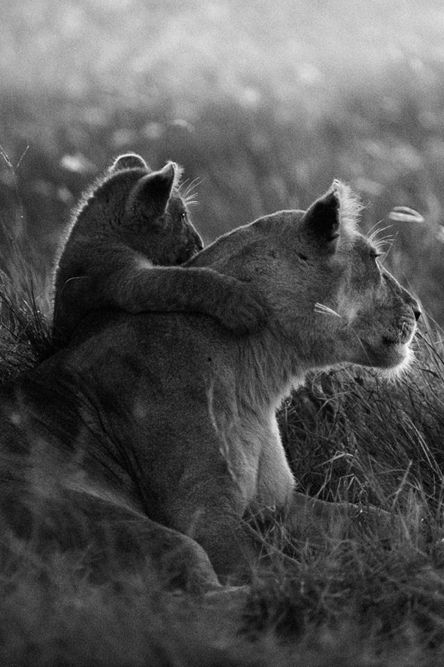 Mother Lion and Cub | Breathtaking in black and white ...