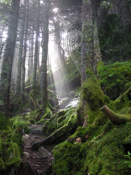 Long Trail, Vermont
