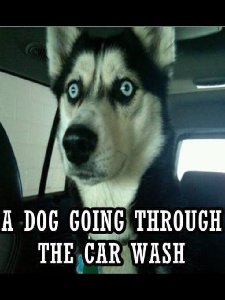 This is ME going through the car wash, but oh so funny!
