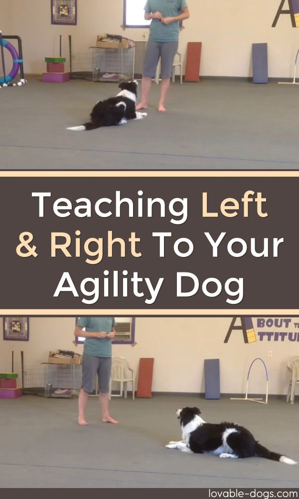 Teaching Left And Right To Your Agility Dog	►►	http://lovable-dogs.com/teaching-left-and-right-to-your-agility-dog/?i=p