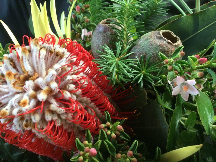 Posies at Peninsula Wild Flower Native Flowers