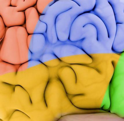 Duidelijke uitleg over hóe een traumatisch hersenletsel ontstaat.
