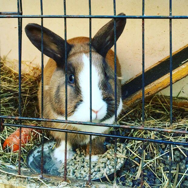 Cute rabbit <3