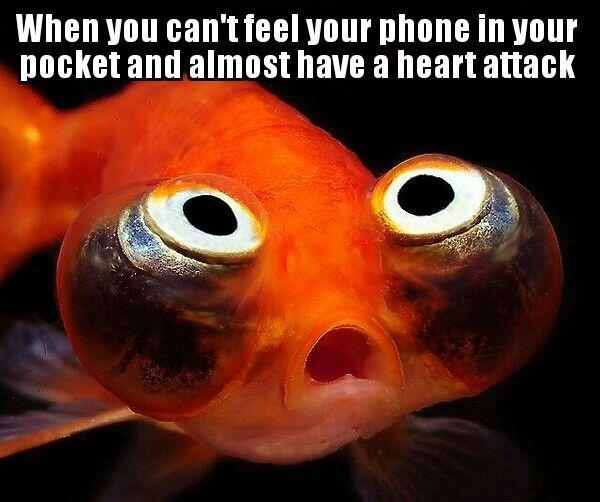 Fish feels via /r/memes http://ift.tt/2mrAPqC