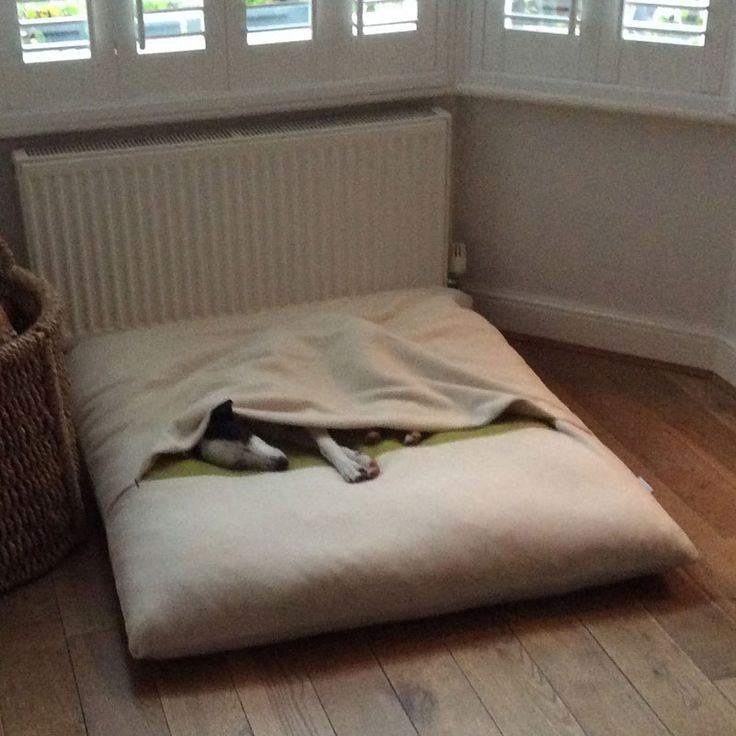 Minnie hat sich bereits im neuen Hundekissen eingekuschelt. Minnie pinching the dog bed. http://www.pet-interiors.de/de/divan-due-hundedecke-und-hundekissen-in-einem_artnr151621