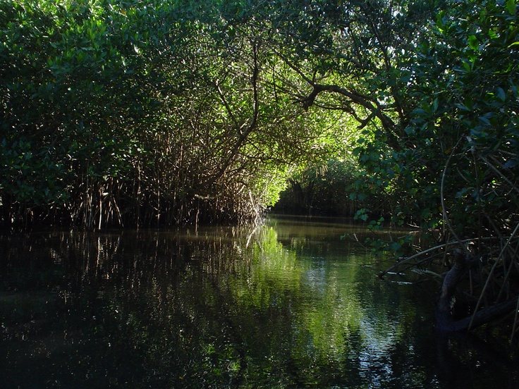 La Tovara, increíble manglar en nayarit mexico