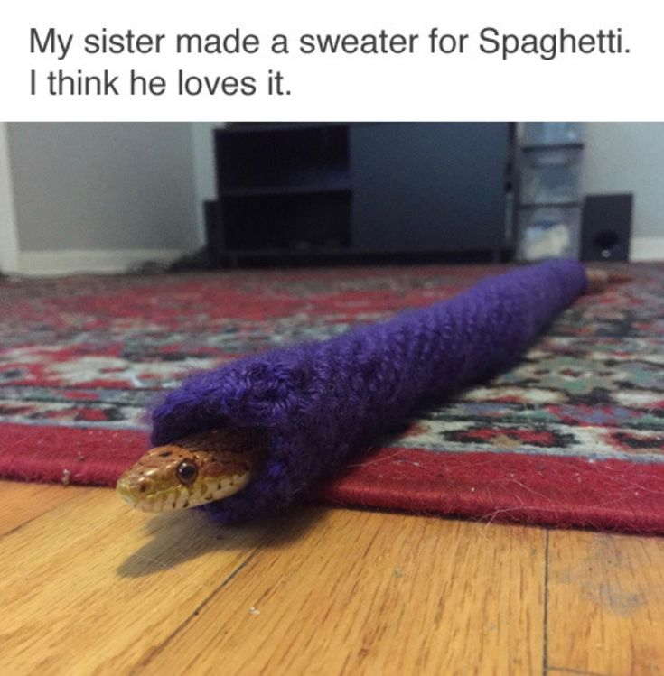 I don't know what's better, that this snake looks remarkably happy about his sweater or that his name is Spaghetti.
