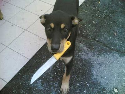 Knife bork