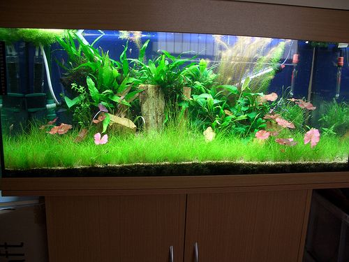 83 best fish tanks with extras images on pinterest fish for Why is my fish tank water cloudy