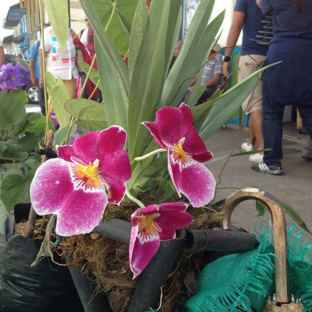 Describe tu pin...Orquídeas en Salento - Colombia