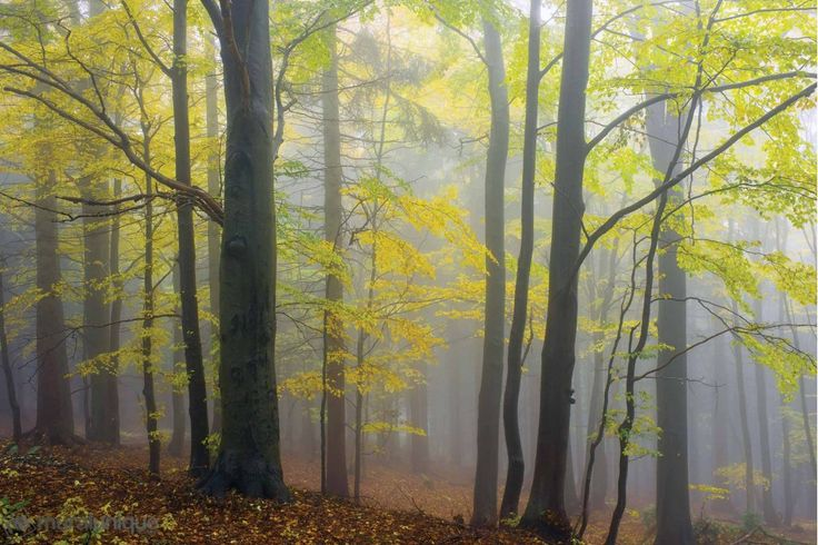 Autumn Morning in the Fog  | Buy Prepasted Wallpaper Murals Online - Muralunique.com