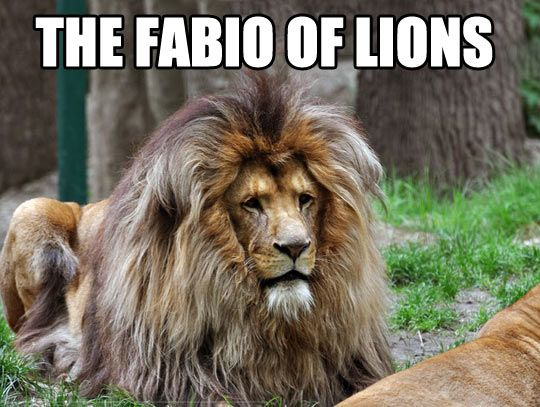 Image result for funny big cats