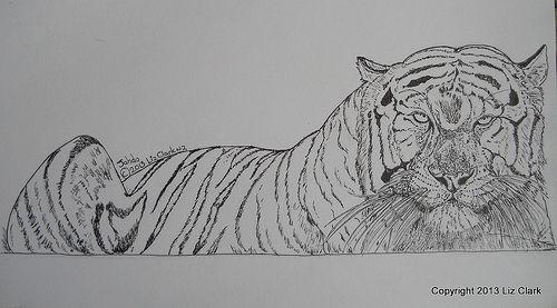 Jahdu White Tiger Pen & Ink