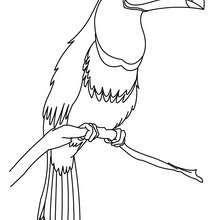 Dibujo TUCAN - Dibujos para Colorear y Pintar - Dibujos para colorear ANIMALES - Dibujos AVES para colorear - Colorear TUCAN