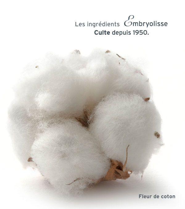 Decoration Mariage Fleur De Coton : Images about fleurs de coton premier