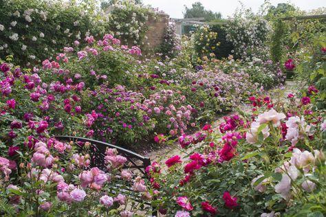 Rosen umpflanzen / verpflanzen | Gartenträume