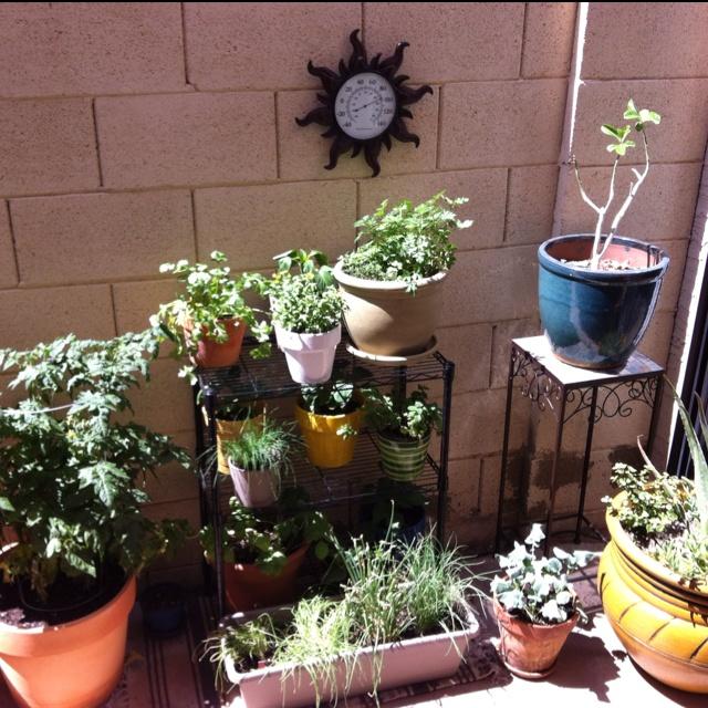Back Patio Veggie And Herb Garden Gardening Ideas