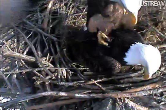 42 Best Decorah Eagles Images On Pinterest  Decorah -8030