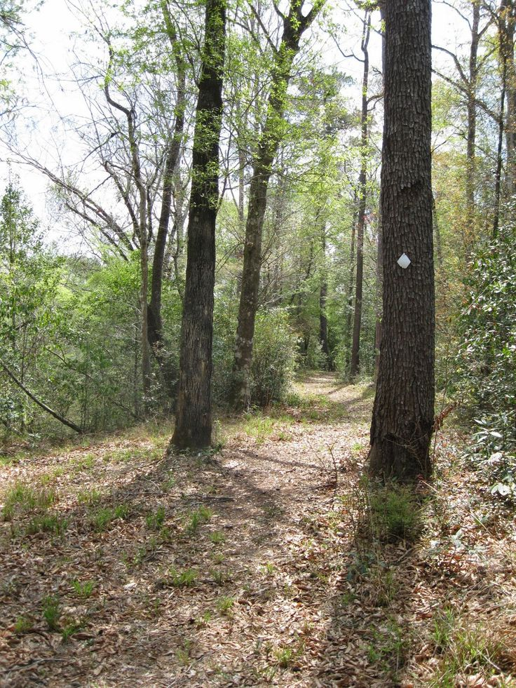 New Orleans Outdoor Companion: Day hiking Black Creek Wilderness and Red Hills in De Soto National Forest in Mississippi