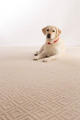 Mohawk SmartStrand Forever Clean carpet with All Pet Protection and Warranty