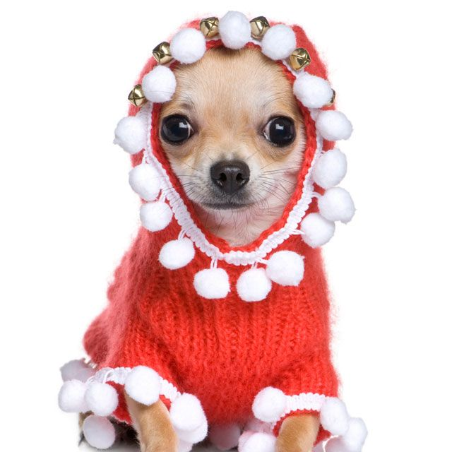 Patricia Skeriotis wants to take Myko Christmas sweater shopping, and he's not cool with it. Twelve days of Christmas sweater shopping... can Myko survive?!