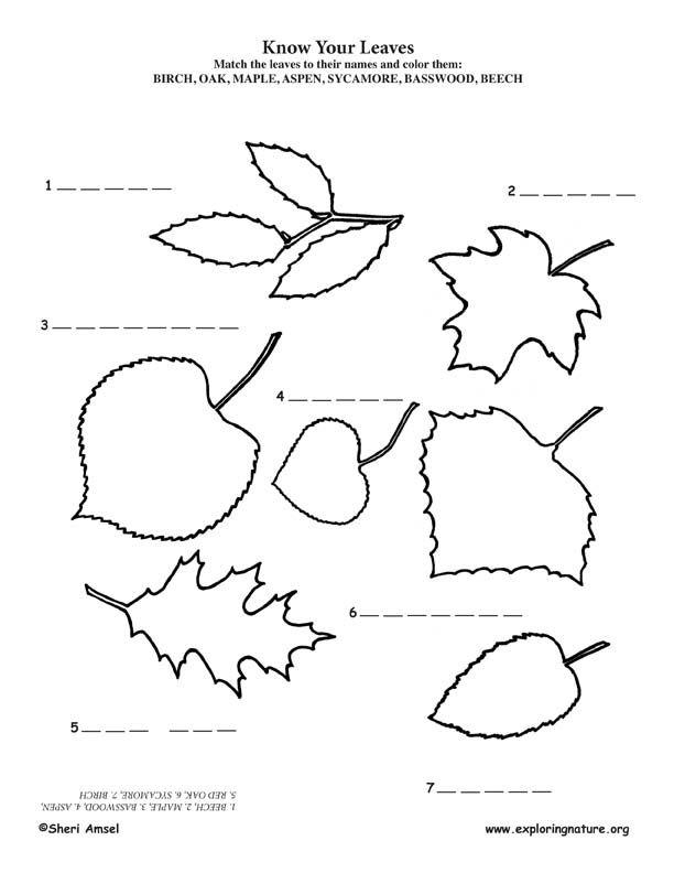 9 best Tree Education Printables images on Pinterest