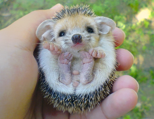 THIS WILL BE MY PET!!!!!!!!!!!!!!!!!!