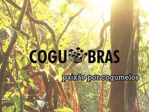Imagens de alguns dos kits Cogoo, da Cogubras. Com eles é muito fácil de cultivar cogumelos comestíveis e ornamentais. Para mais informações e para adquirir,...