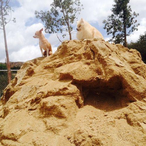 Kings of the hill #BensonMillan #TacoMillan
