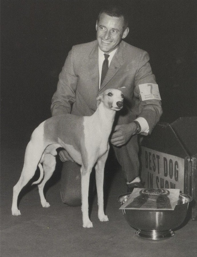 """Westminster Dog Show Week! The only whippet to ever go """"Best in Show"""" at Westminster! He arrived in the US from England in 1962, and that's when Bob Forsyth started handling him - the """"little long tail,"""" as William Kendrick called him. Everyone else called the Whippet """"Ricky."""" CH Courtenay Fleetfoot of Pennyworth's Best in Show win in 1964 was the first for the breed. - AP Wide World"""
