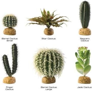 Cacti are quite famous all over the world and they come in for Low maintenance desert plants