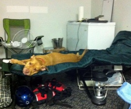 Disaster Planning for Pets, Family : The Humane Society of the United States