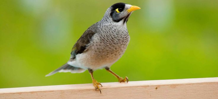 If Pest birds and animals can cause serious problems for both homes and businesses. then choose the professional bird control services in Sydney to prevent damage to your homes and businesses