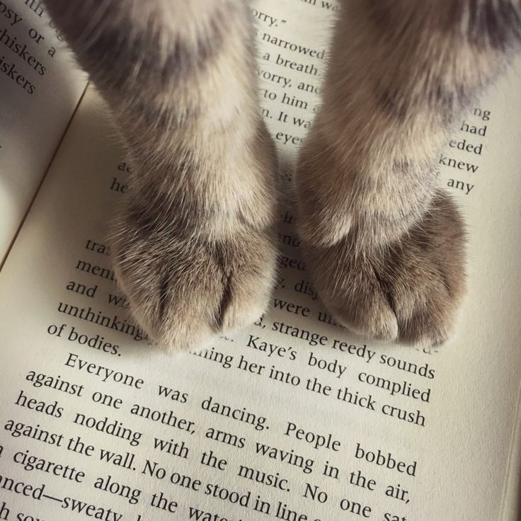 When your cat decides you've read enough for today.