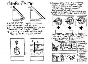 Die besten 25+ Facilitated diffusion Ideen auf Pinterest