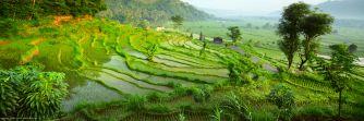 Flitterwochen auf Bali - Exotische Hochzeitsreise-Angebote für Euch - Persönliche Beratung & Best-Preis-Garantie