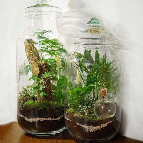 114 best terrarium images on pinterest miniature gardens fish tanks and gardening. Black Bedroom Furniture Sets. Home Design Ideas