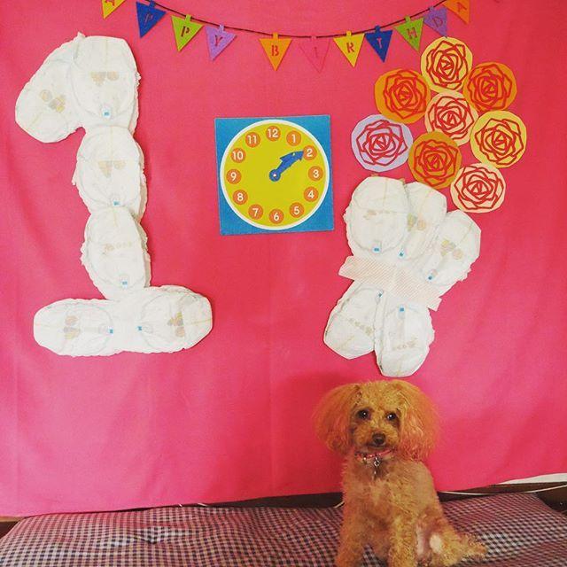: あたちのほうが、上手にじっと出来るもん。 : #オトウト君1歳になりました #おむつアート #撮られる気満々 #オトウト君はじっと出来ないから #2日がかりで撮りました💦 #Instagram #Instadog #dogstagram #わんこlove #犬 #愛犬#愛犬家 #親バカ #toypoodle #poodle #dog #peach #Ilovedog #プードル #トイプードル #ティーカッププードル #レッド #ピーチ