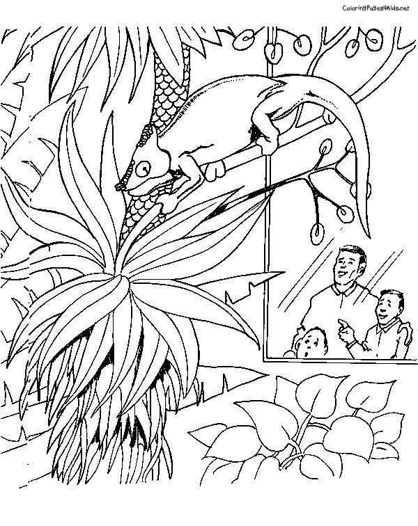 chameleon coloring pages - Chameleon Coloring Pages Print