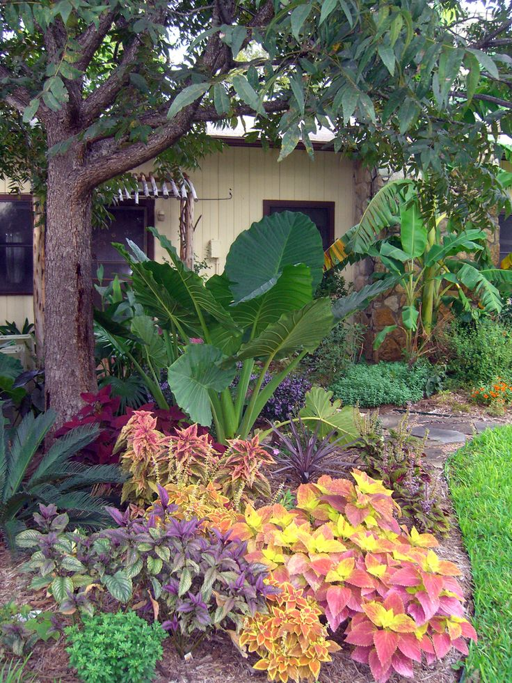 Best 25 palm trees landscaping ideas on pinterest for Florida garden designs