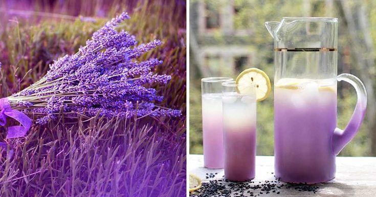Zázračné vlastnosti levandule a recept na levandulovou limonádu
