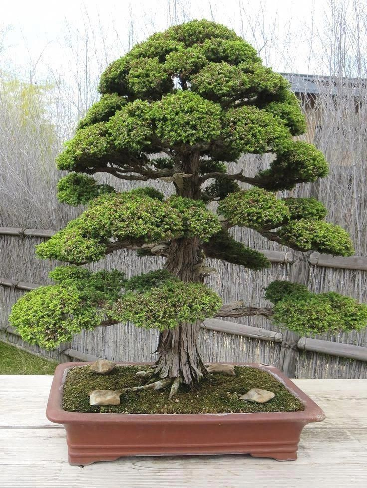 Pruning A Bonsai Tree To Care For This Living Work Of Art Bonsai