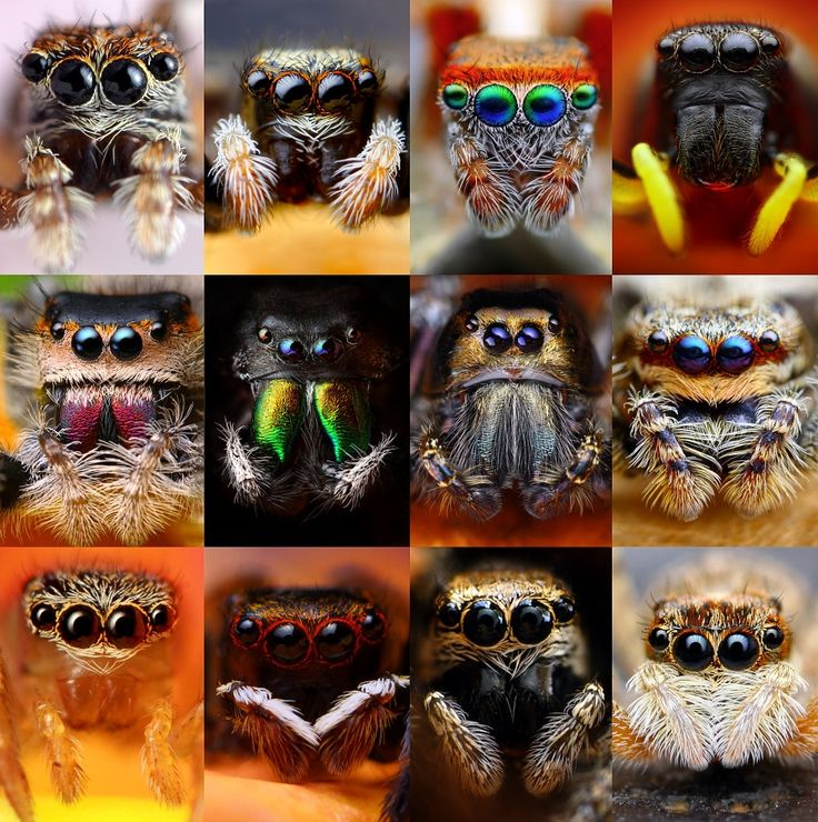 spiders...even though i HATE spiders I thought this was a really cool pic!