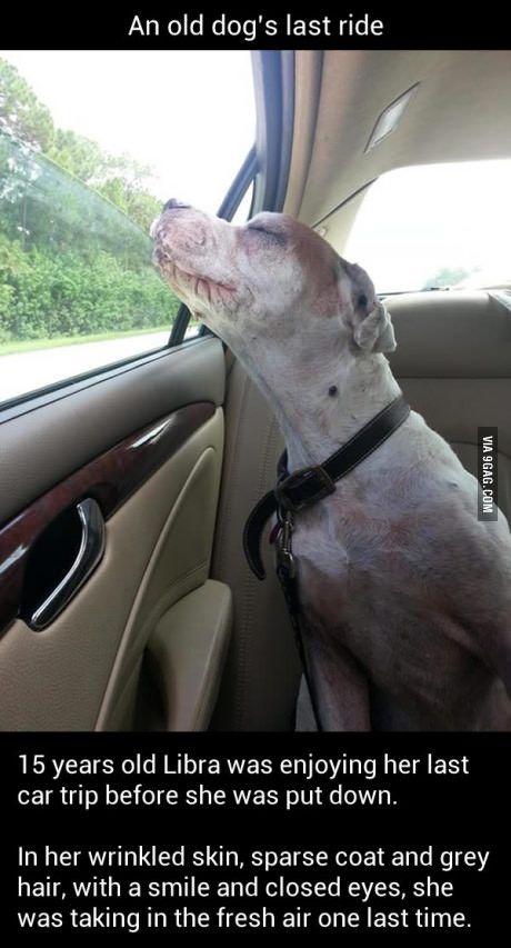 Old dog enjoying the last ride. So much feels...