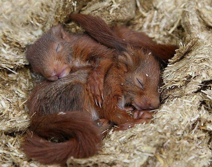 Top Les 221 meilleures images du tableau Adorable Squirrels sur  XI57