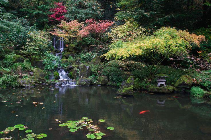 317 best images about koi pond on pinterest japanese koi for Michael koi pond