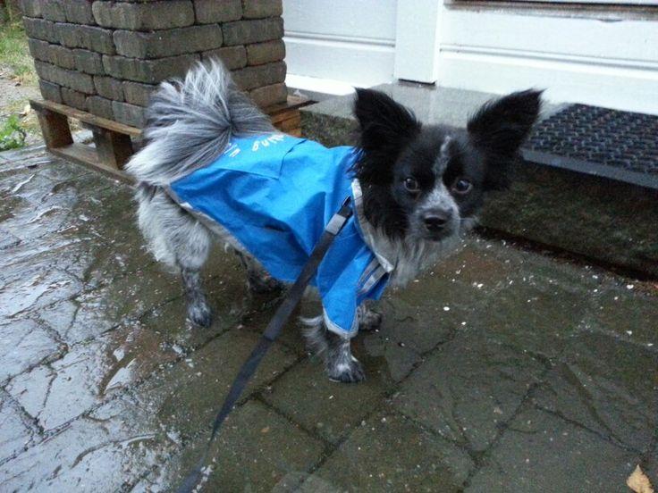 Don't like the rain .